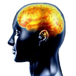 Brain Fitness Program Reviews