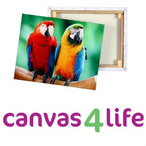 Does Canvas 4 Life work?