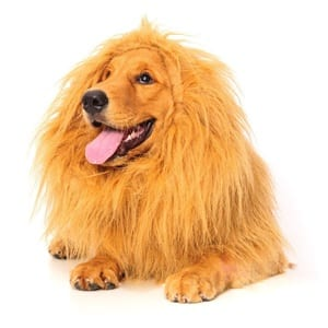 Does the Lion Mane for Dog Work?