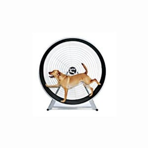 Does the Gopet Doggy Treadwheel Work?