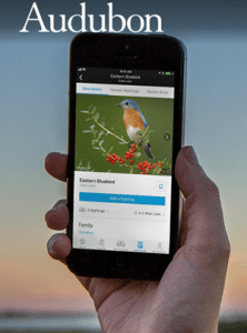 Does the Audubon Bird App Work?